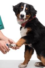 dog cutting nails dog grooming