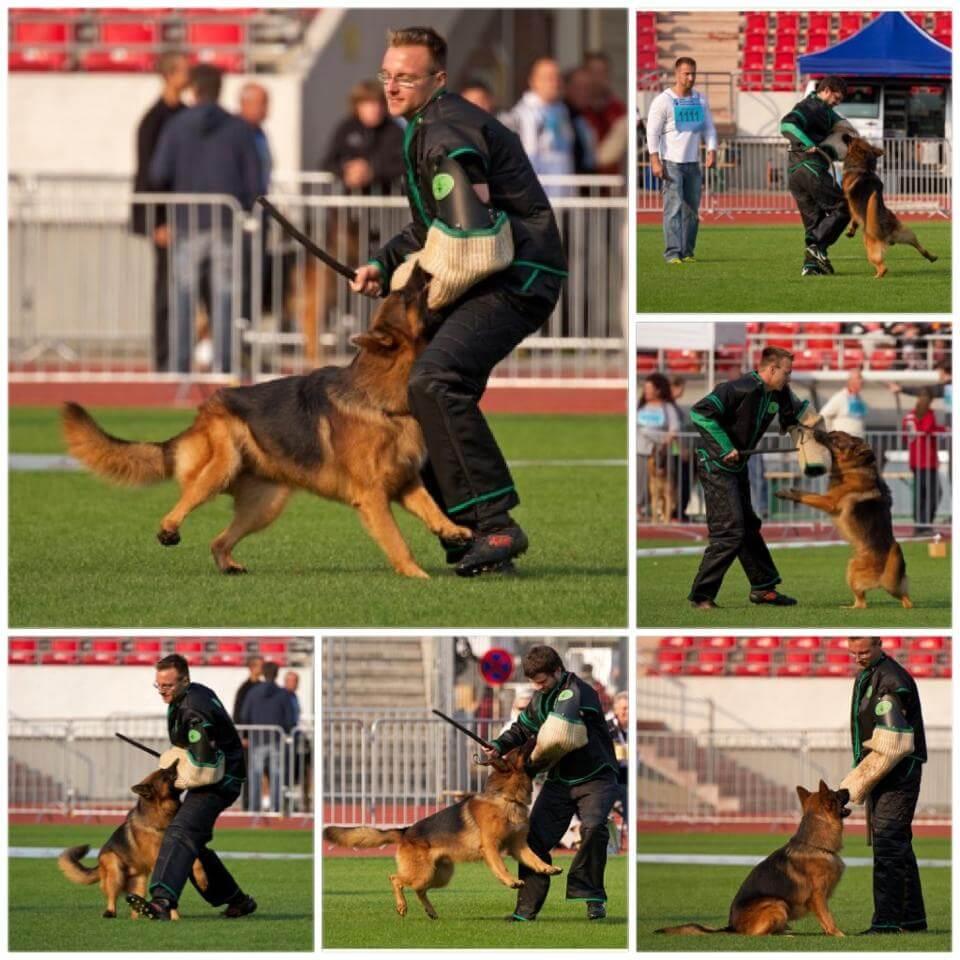 International Standards (IPO) Schutzhund | Landheim Training