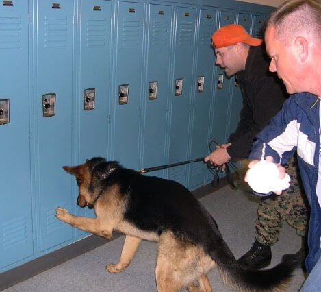 police dog searching